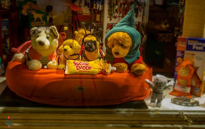 Pet Shop Window After Dark