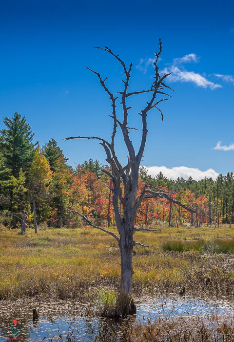 Lone Tree Against An Autumn Backdrop