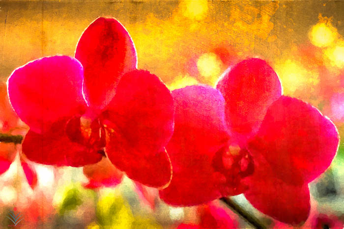A Red Orchid Pair in Nashua