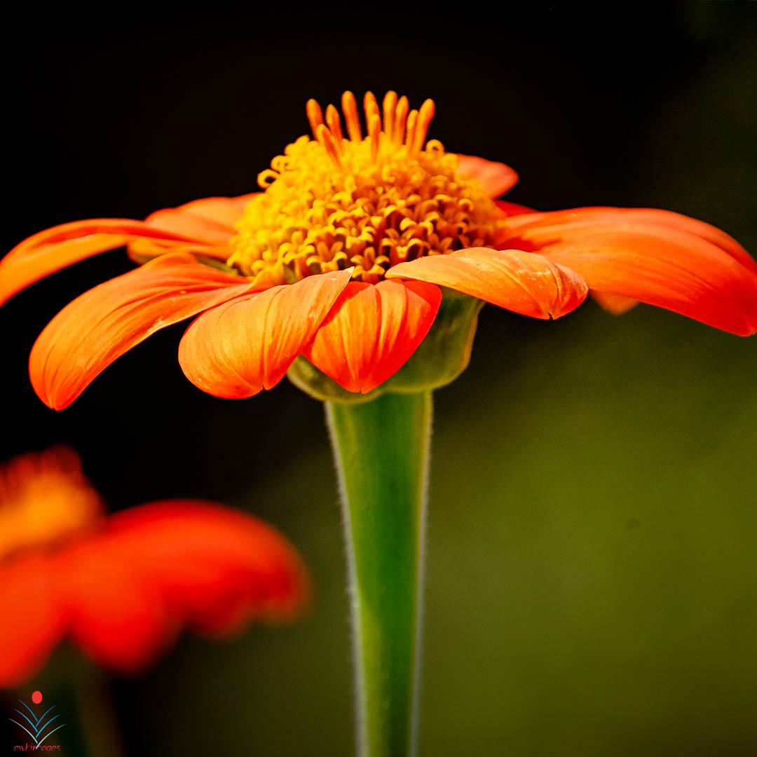 Orange Flower on the Horizontal.jpg