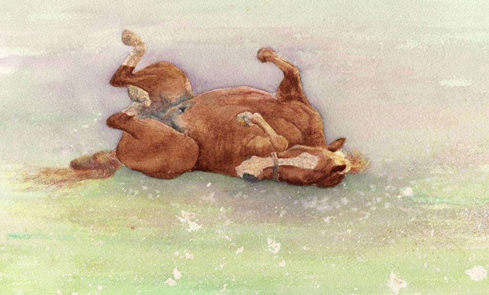 HorseRolling.jpg