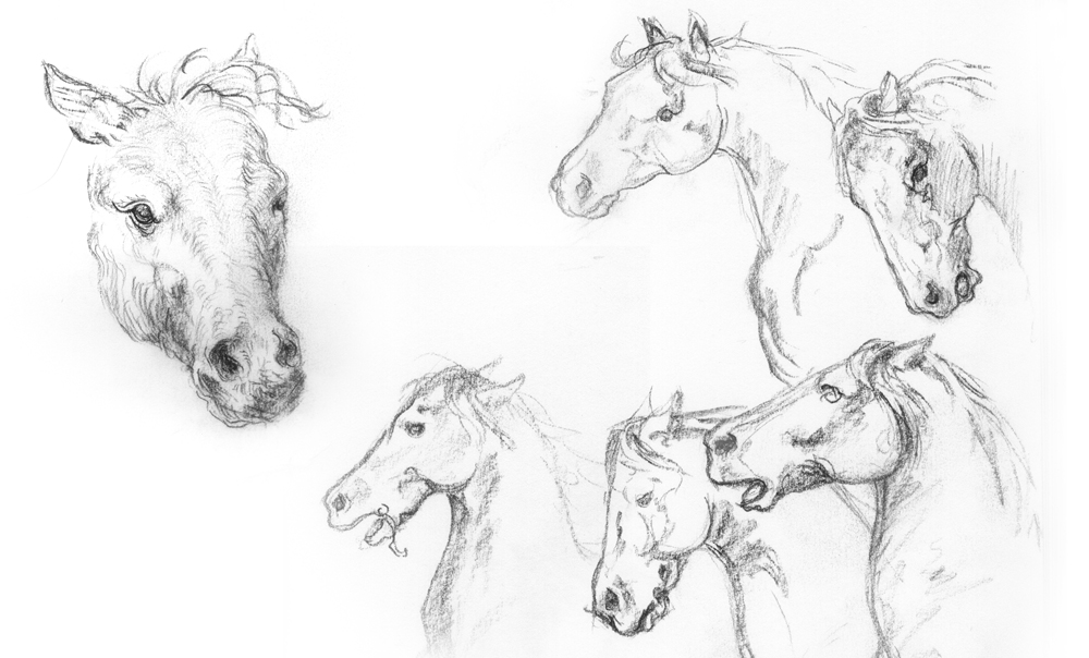 HorseSketches_1.jpg