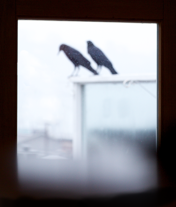 Crows on the porch