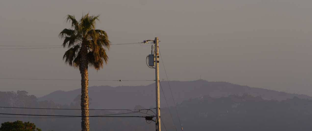 MV palm and power pole.png