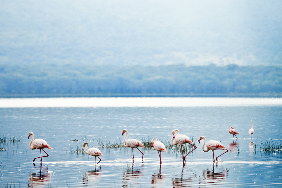 flamingos-of-nakuru_12949542483_o.jpg