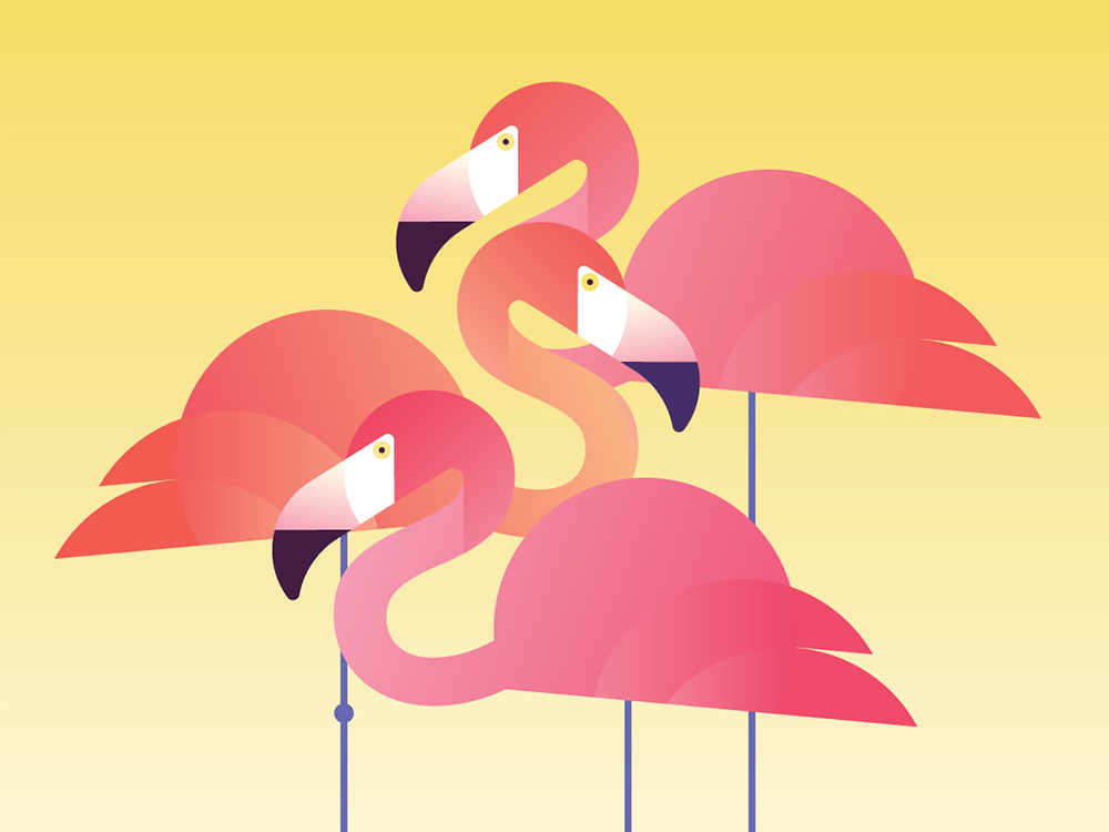 The-Creative-Canopy_Flamingos-COVER.jpg