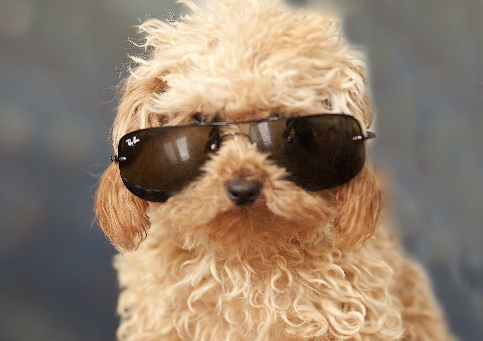 Tilly with sunglasses.jpg