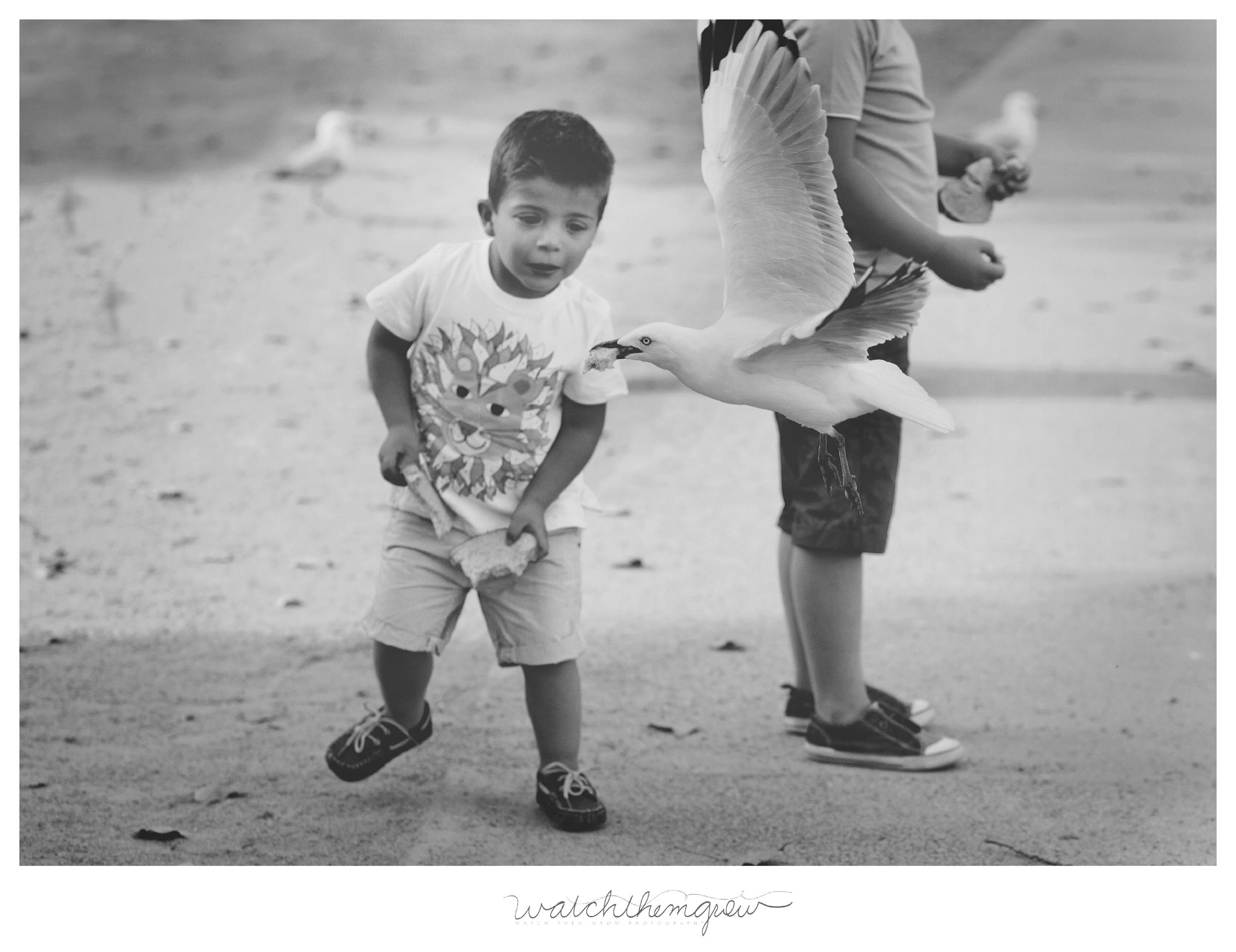 Children feeding seagulls!