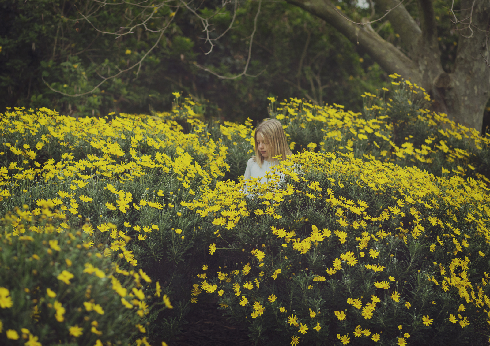 Child amongst the daisies!