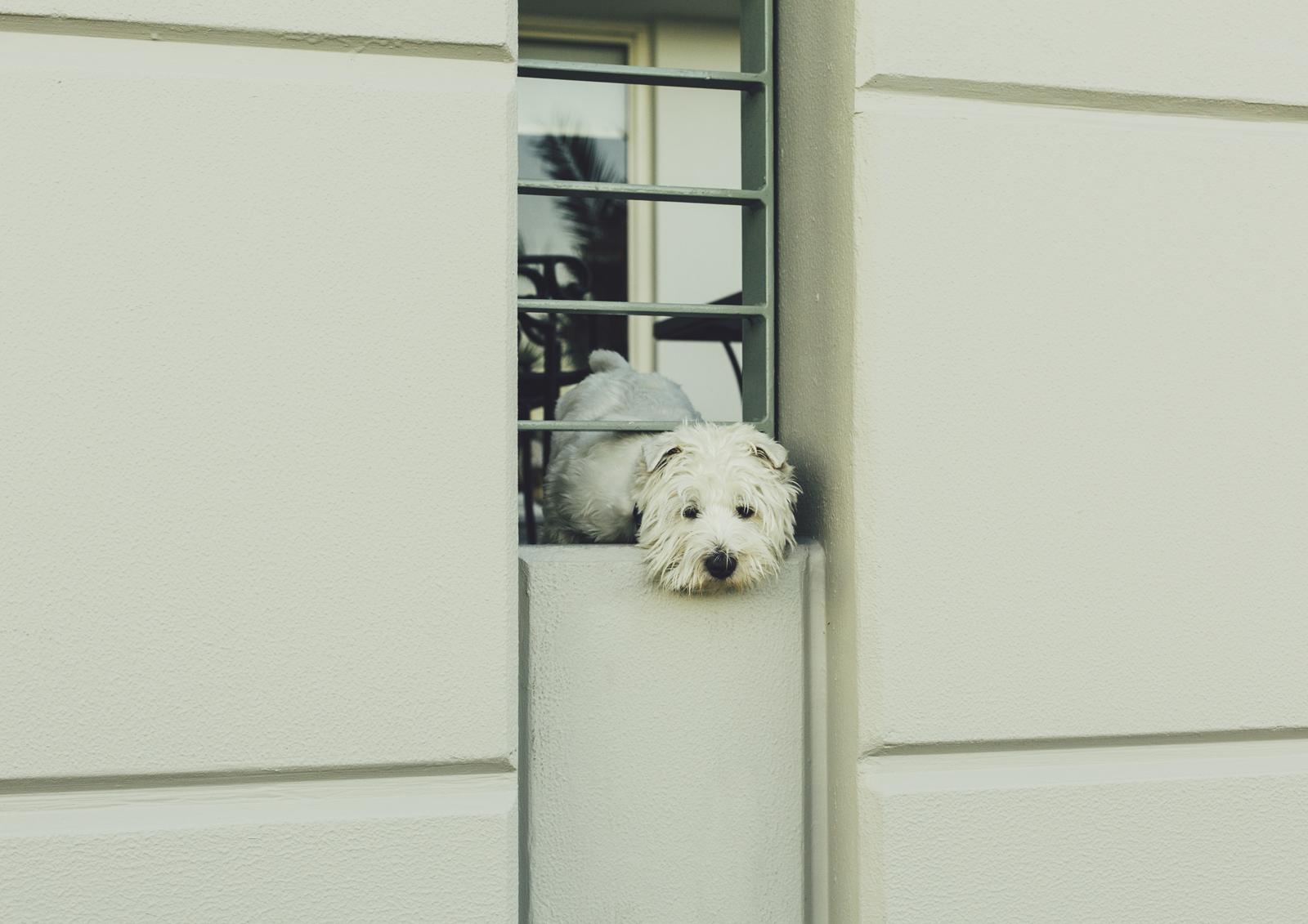 A dog we met at Princes Pier, Port Melbourne