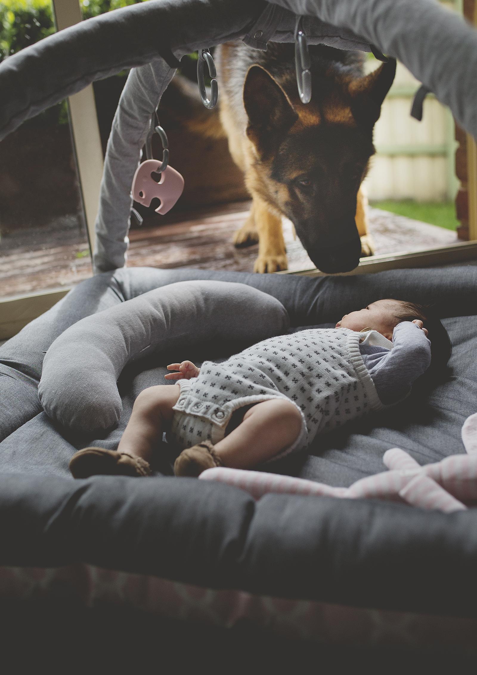 Family dog watching over newborn baby!