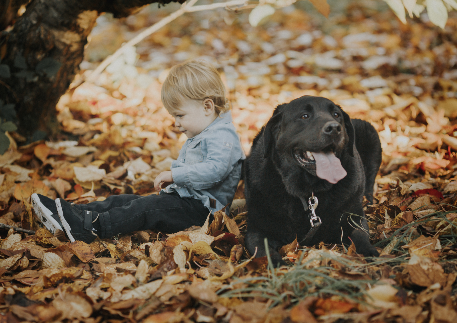Little toddler and his dog