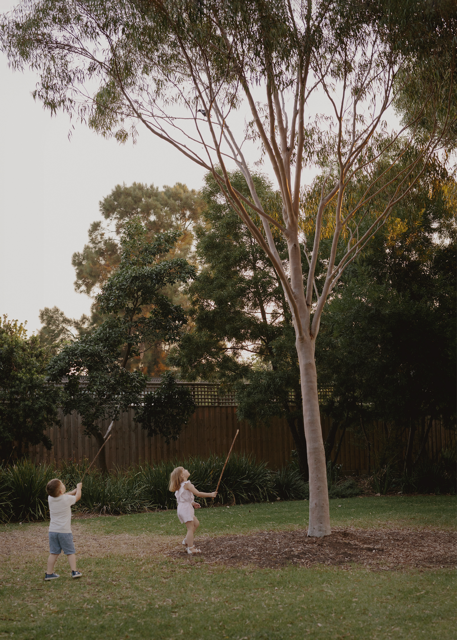 Children looking at a magpie in the tree