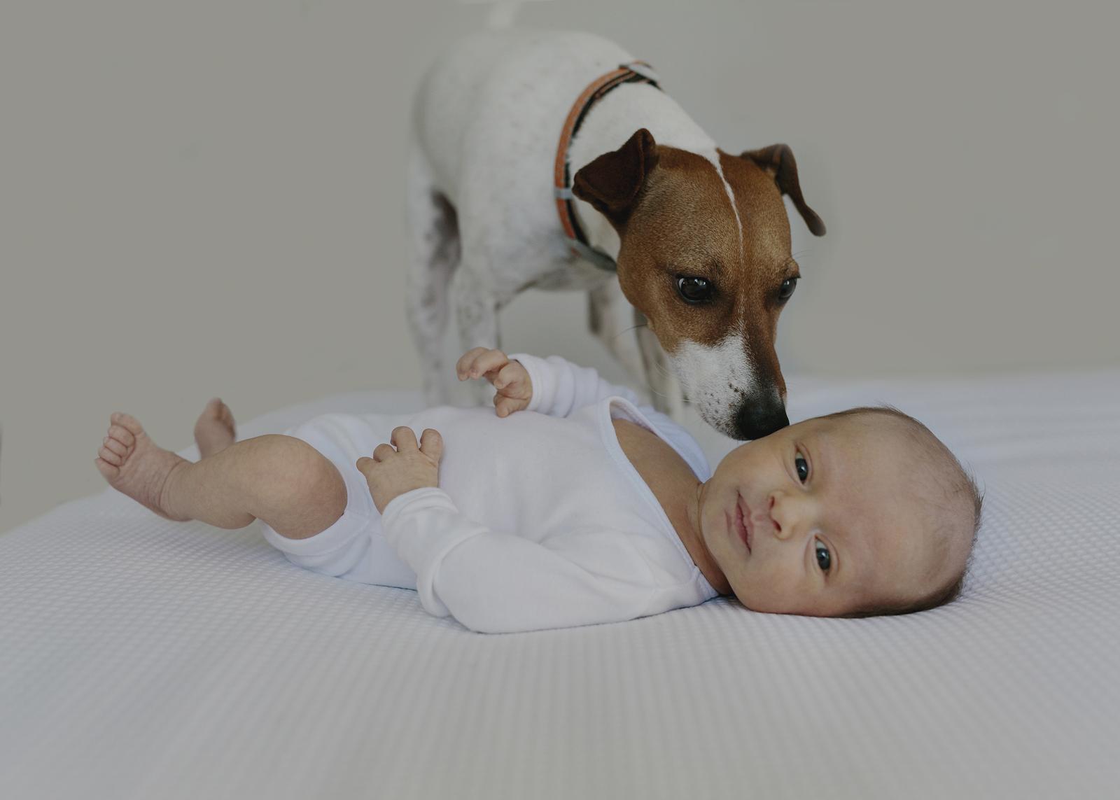Family dog wondering who this newborn baby is