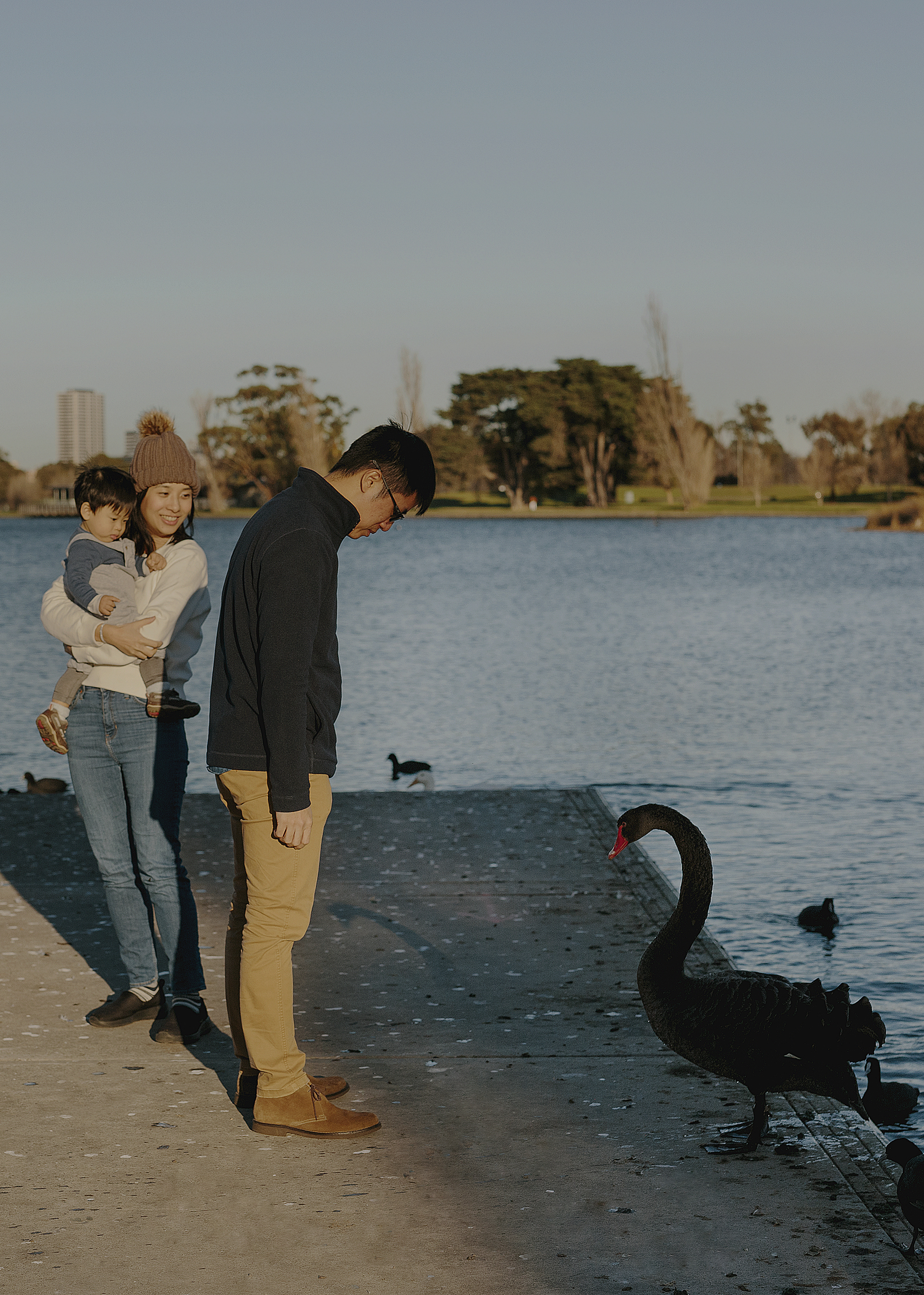 Family watching the swans at Albert Park Lake