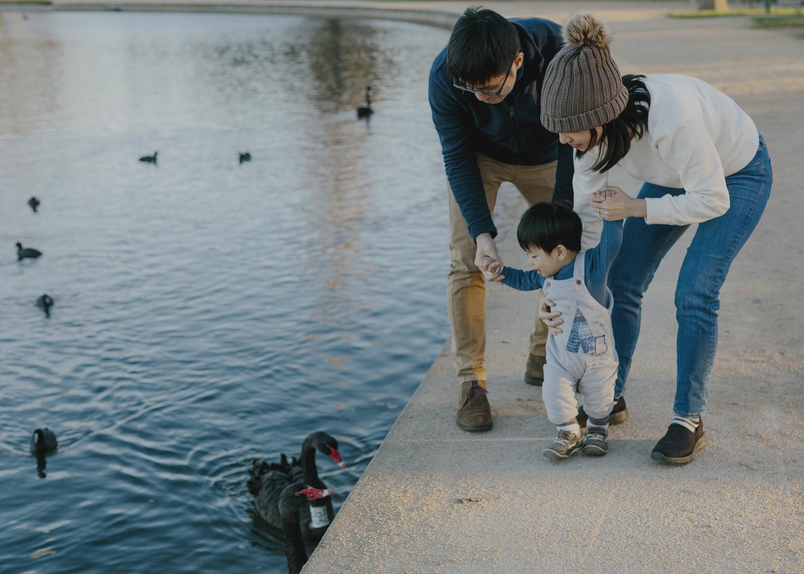 Family looking at the swans at Albert Park Lake