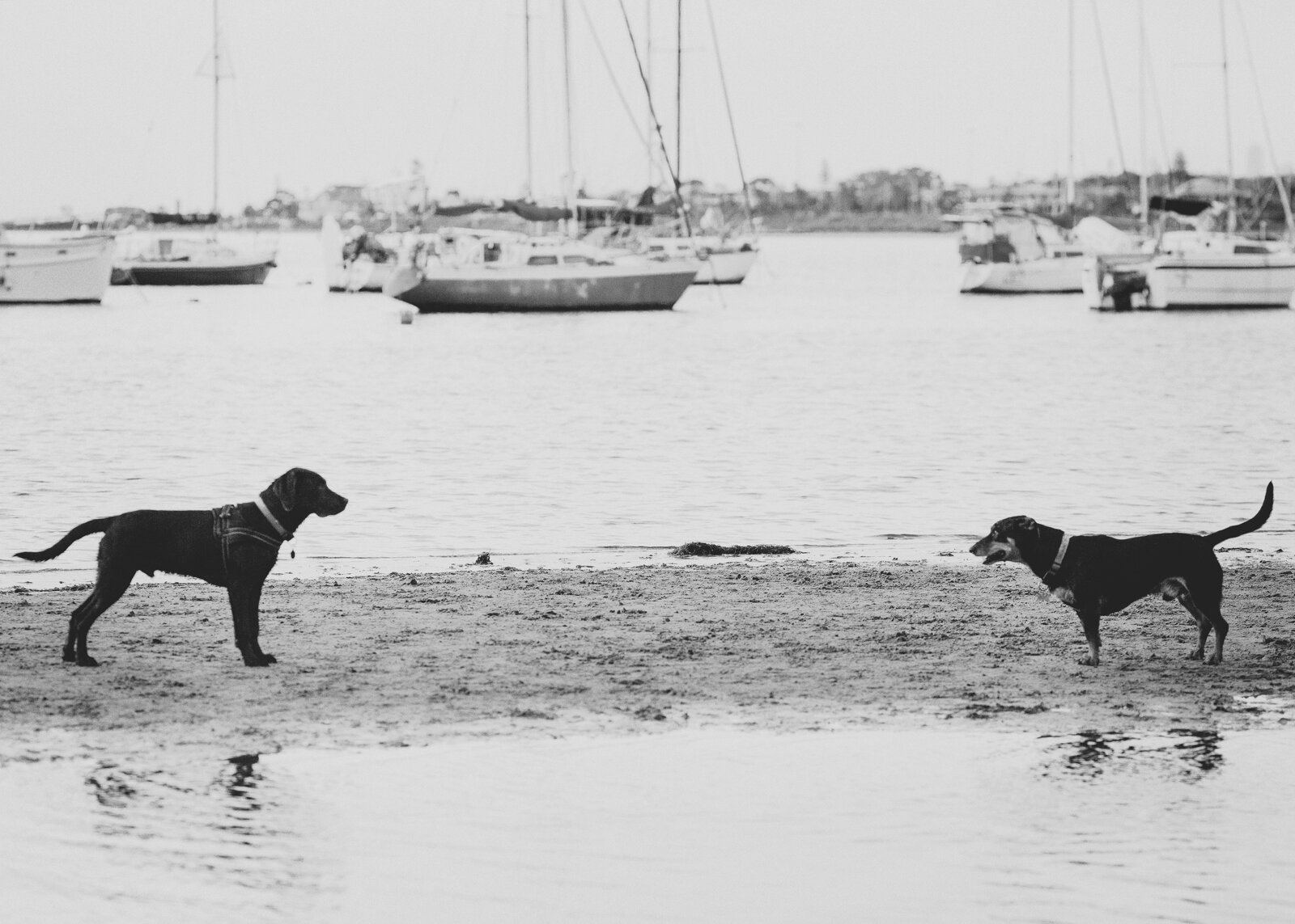Family and Pet Photography Melbourne