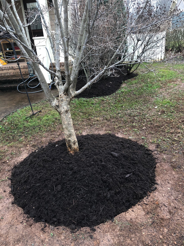 mulch-bed-around-base-of-tree