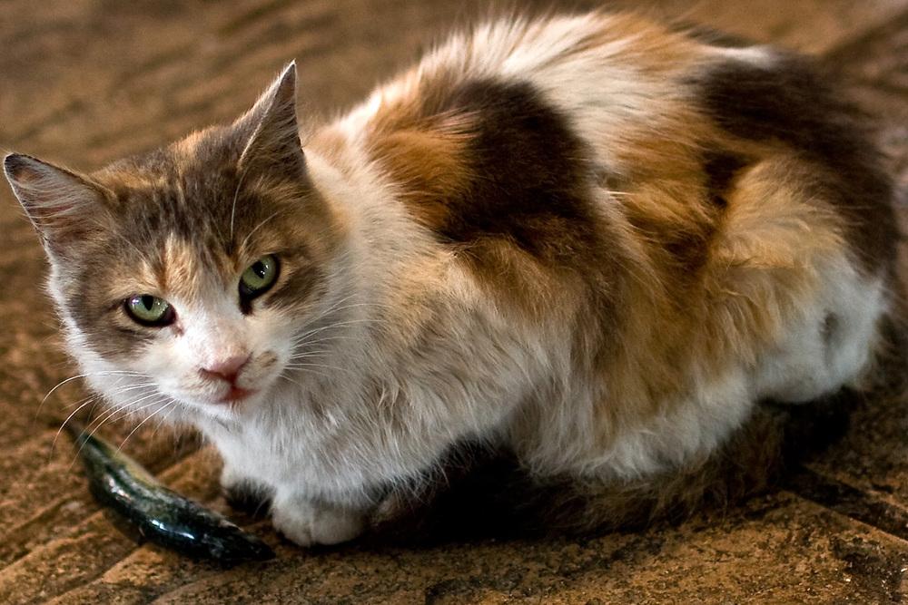 Casablanca Cat Burglar