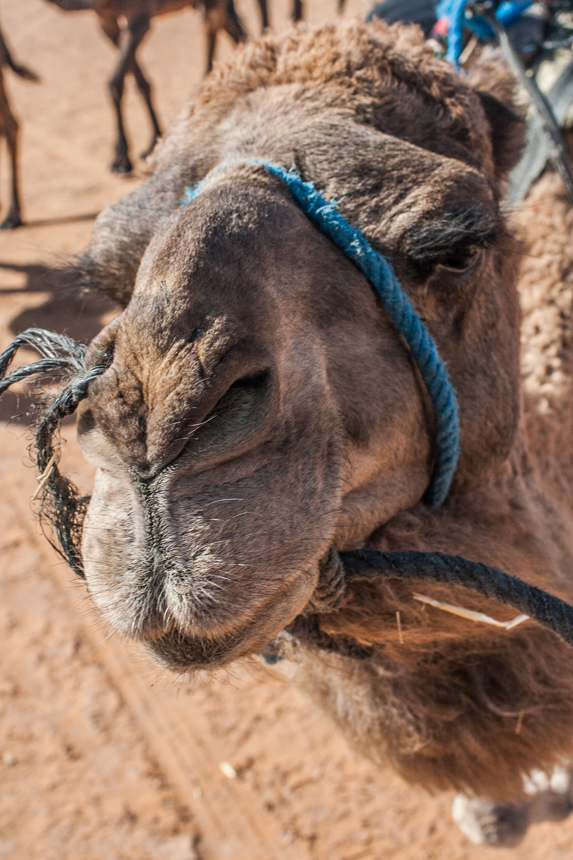 Morocco-131.jpg