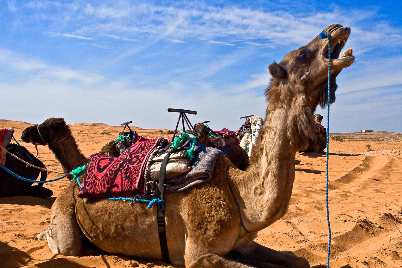 Morocco-137.jpg