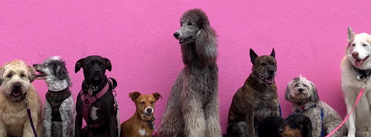 barkit_design_indesign_training_dogs.png