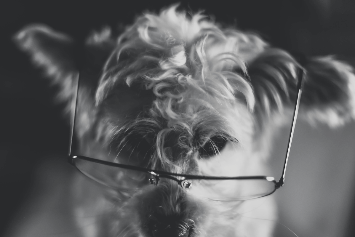 Dog_with_Glasses.png
