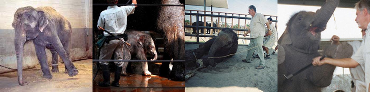 3.elephant-pics-from-net.jpg