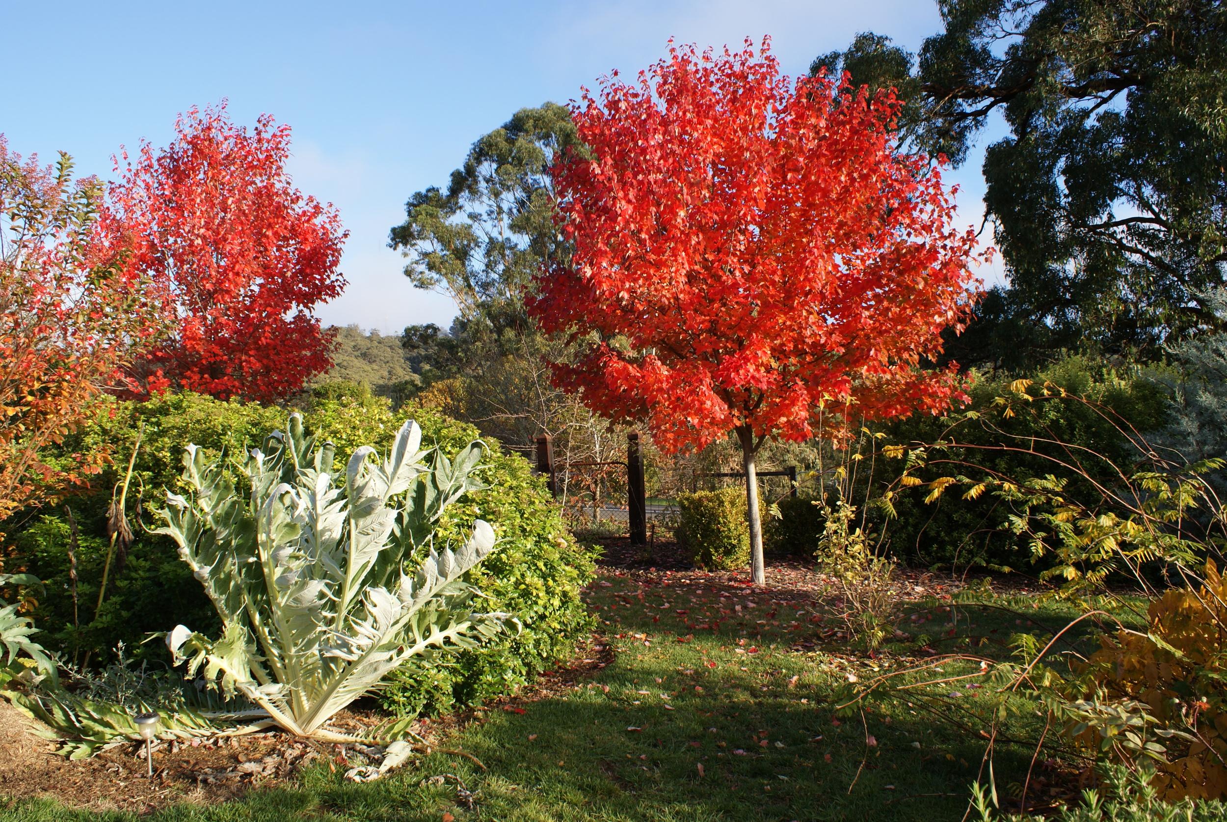 autumn foliage mt. lofty