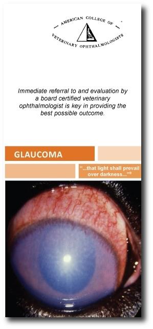 ACVO-Glaucoma-brochure with shadow.JPG