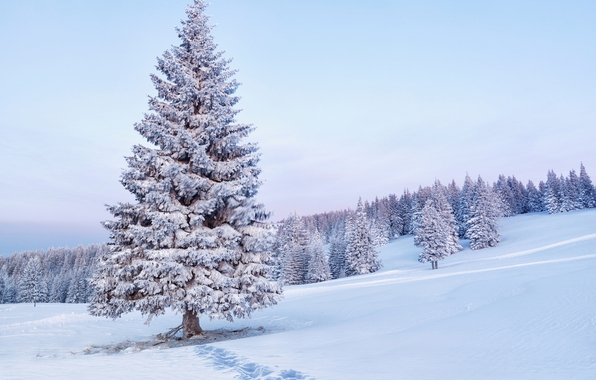 balsum-fir-snow2.jpg