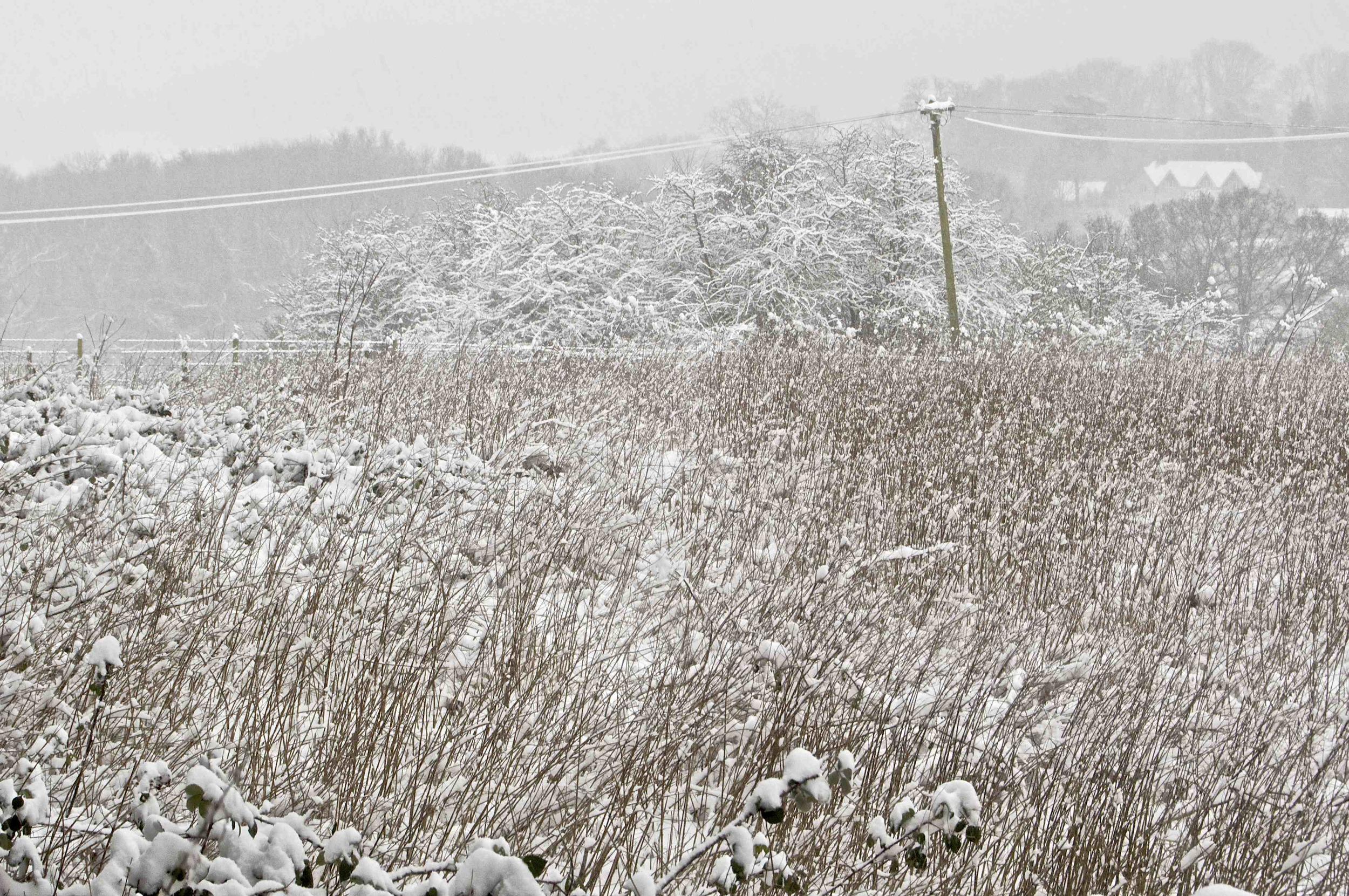 Snowy Landscape 1