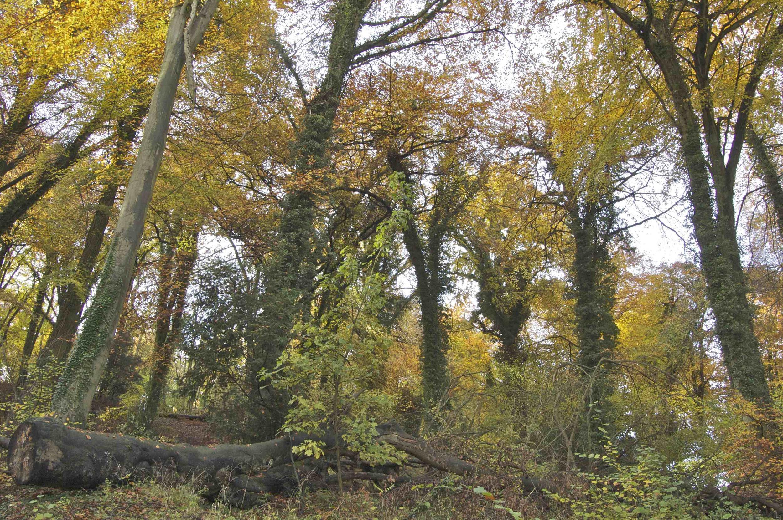 Woodland on Selborne Common 2