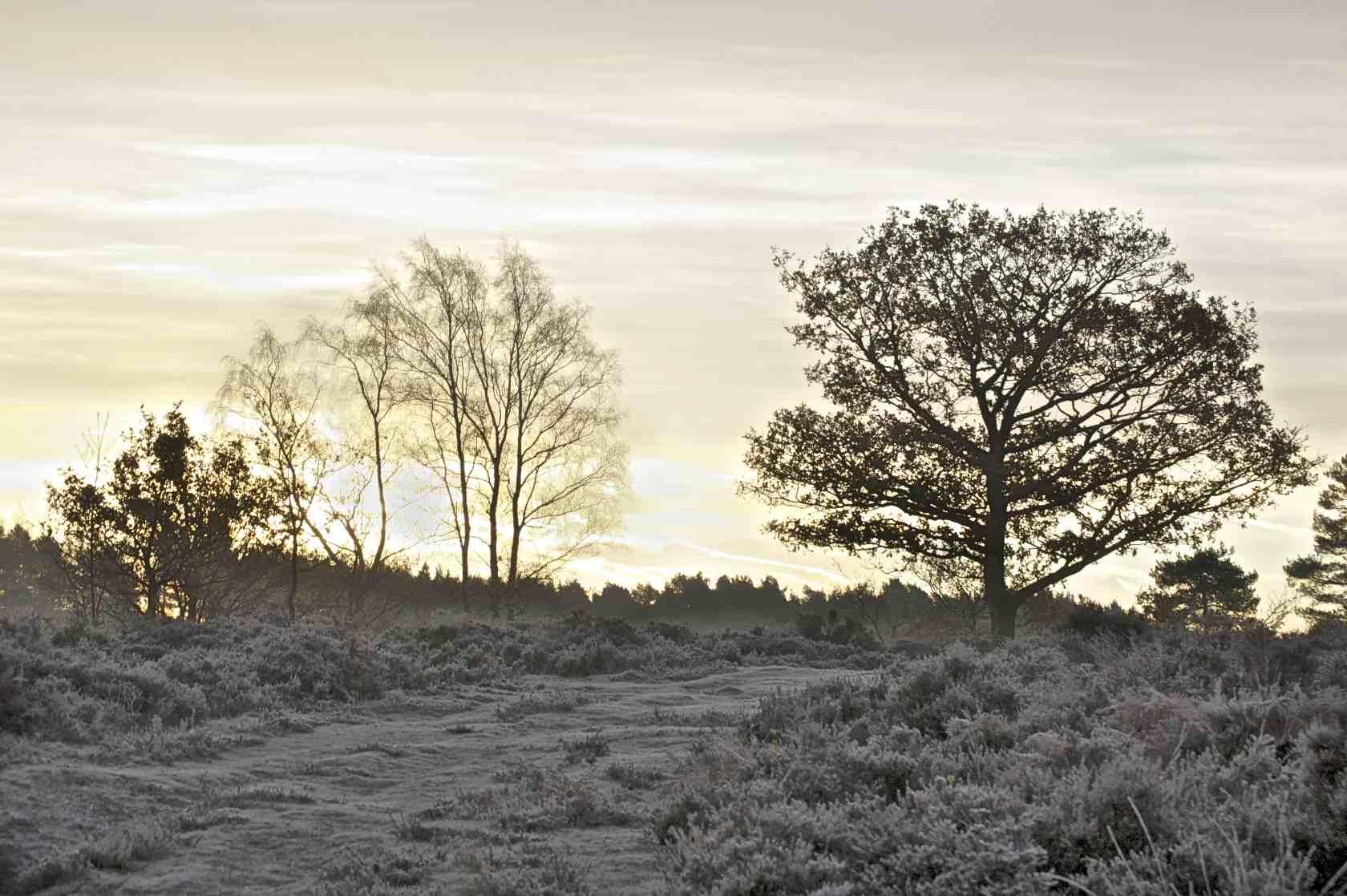 Sunrise on Longmoor Inclosure 1