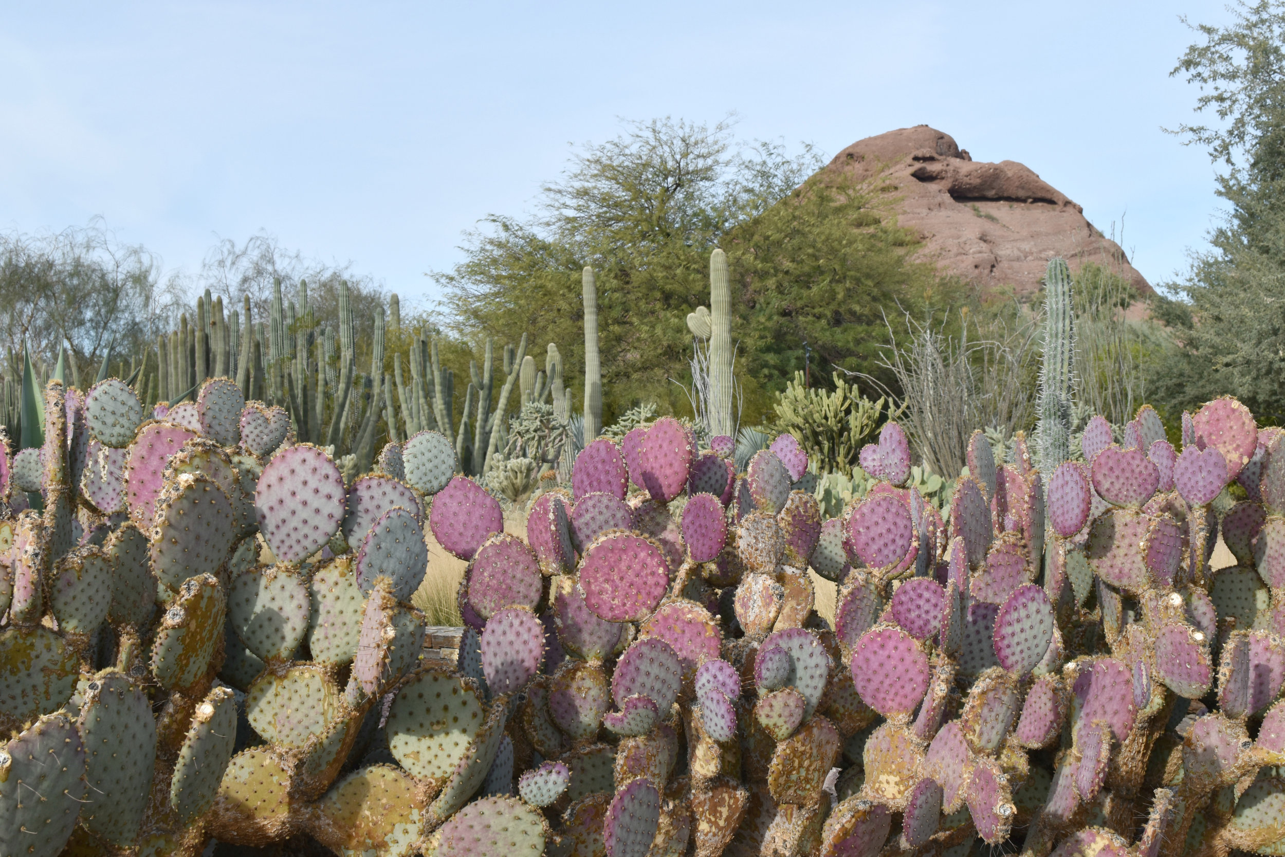 We left with some candy made from cacti like these!