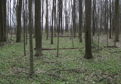 108 acres located in Chester Twp, Clinton County.  Donated 2000.