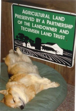 Willie is very happy and content to live on a preserved property. He thanks you for your support of Tecumseh Land Trust.