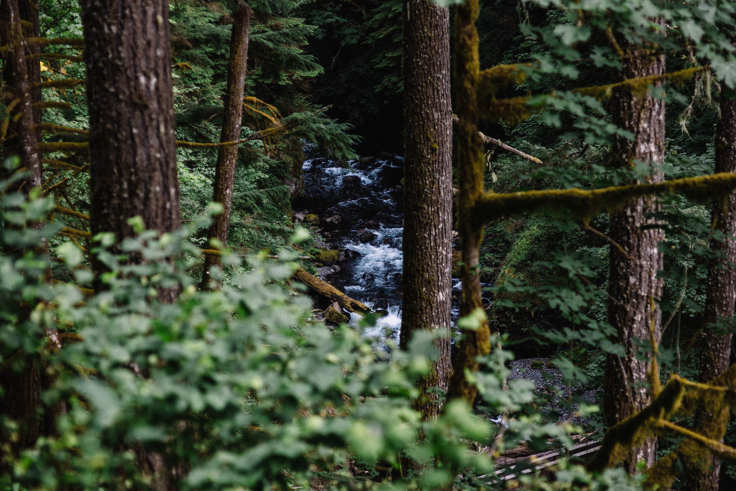 Wahclella falls portland oregon engagement photographer000.JPG