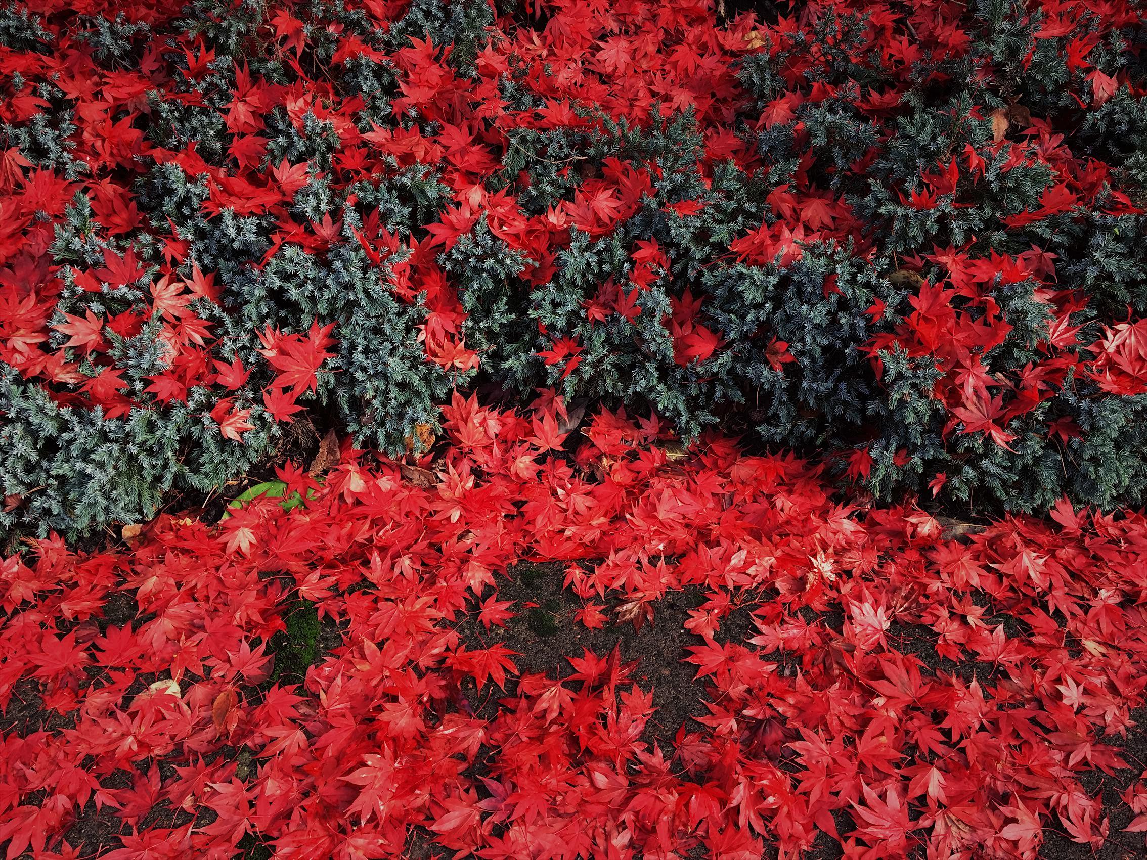 Portland seattle oregon Destination Wedding Photographer0142.JPG
