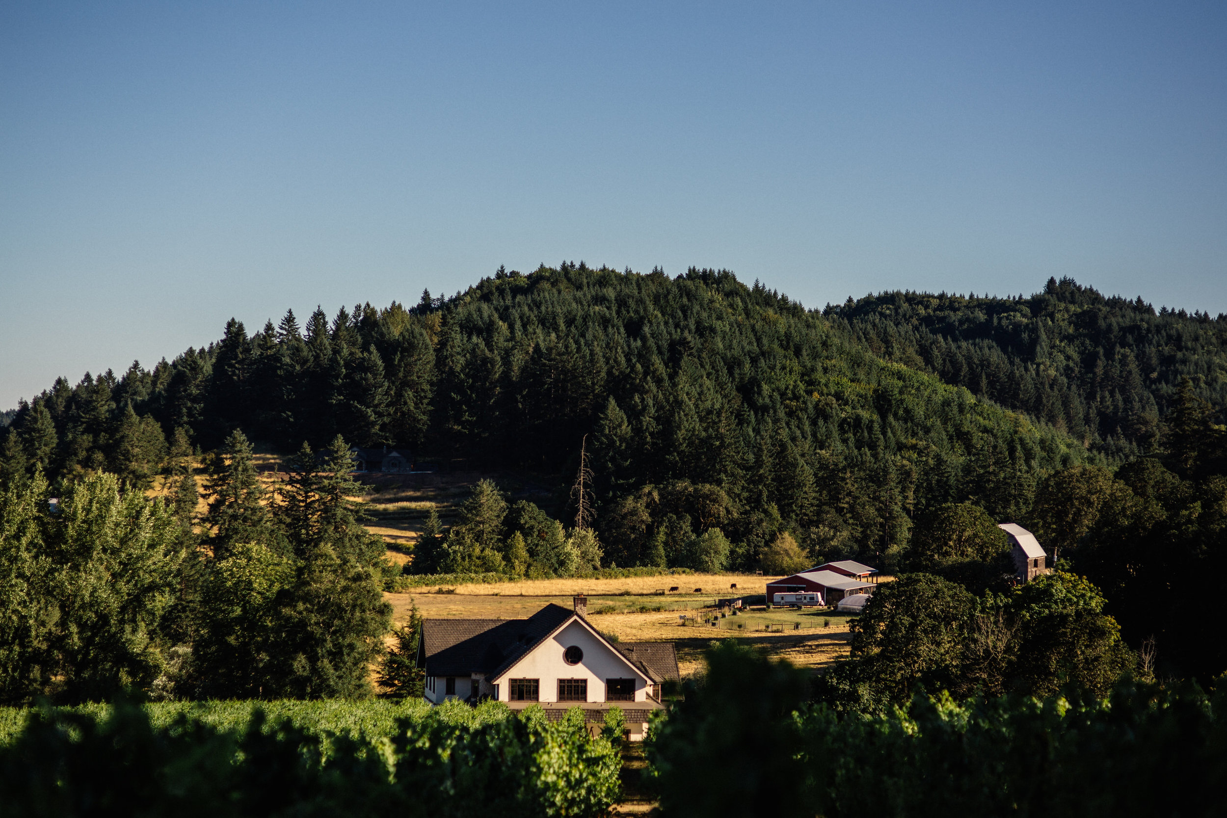 Beacon hill winery wedding photographer Oregon destination054.JPG