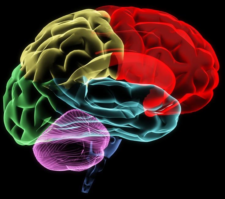 Brain Coloured_C.F.-04.19.13.JPG