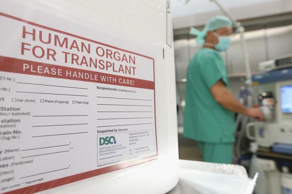 Human Organ for Transplant 2_C.F.-05.20.13.jpg