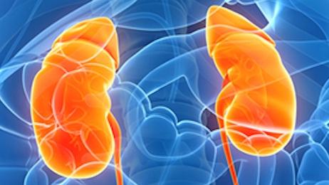 Kidney Disease -
