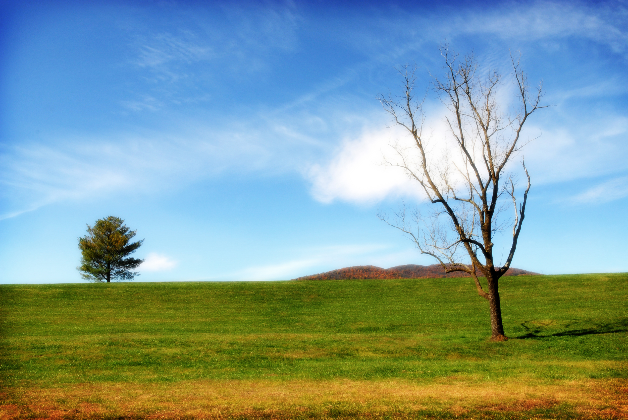 treeslotr.jpg