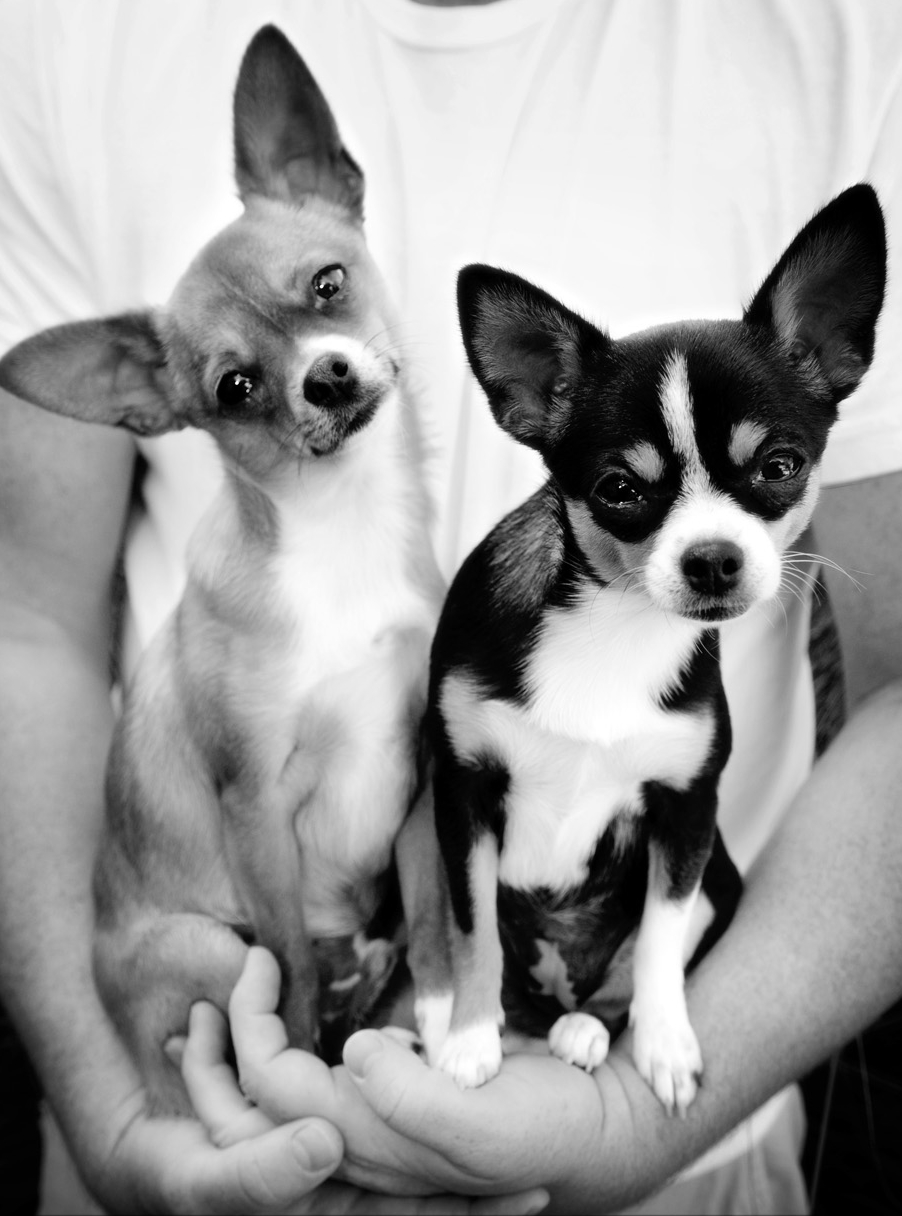 mcp_dogs003.jpg
