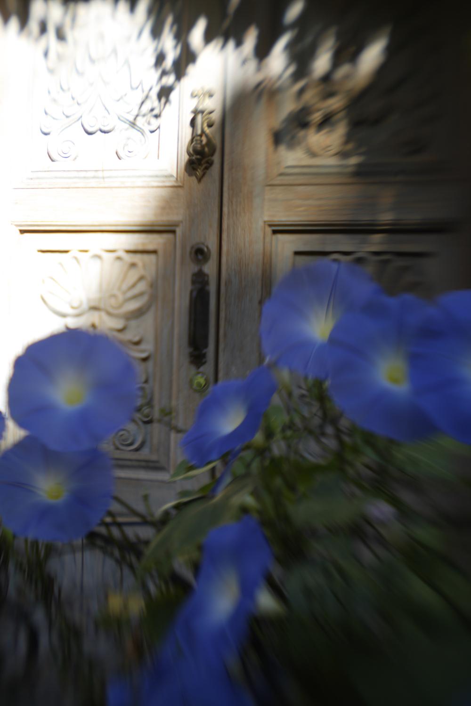Flores a lo Largo del Pasamano