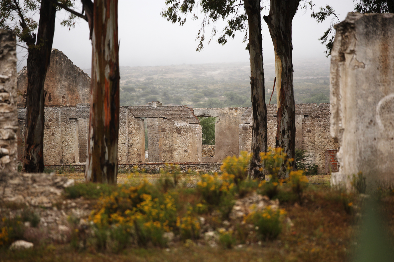 Pozos, Hacienda (w trees)
