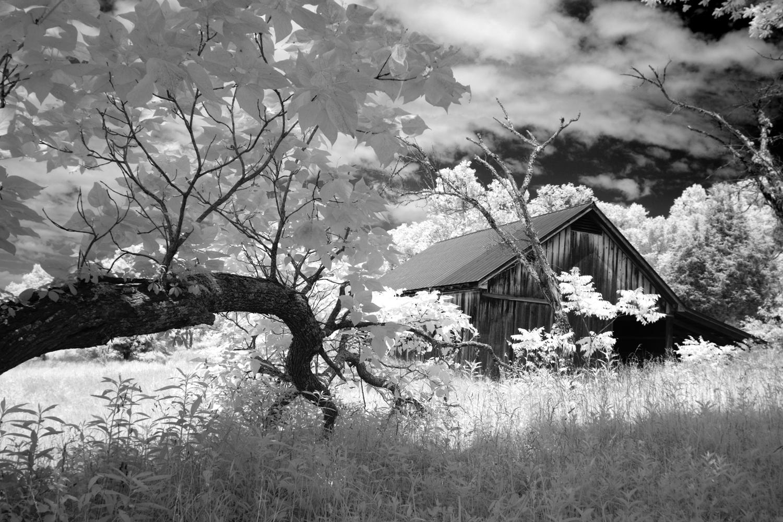 Tree Limb and Barn