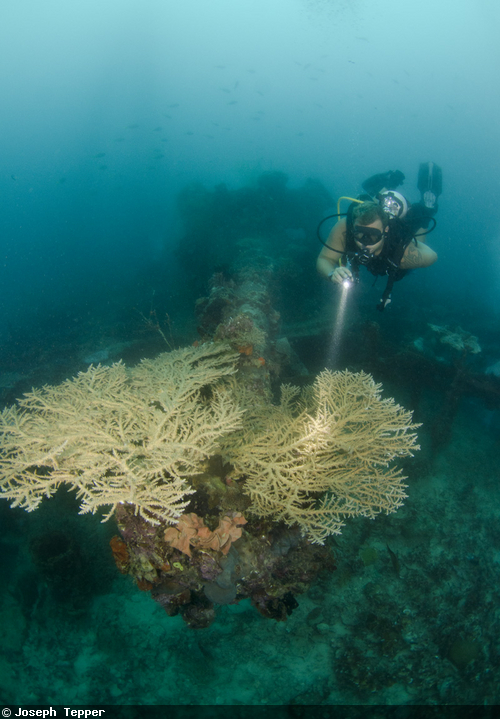 Massive guns still guard the wreck of the Iro Maru, which lies in 100-feet of water.