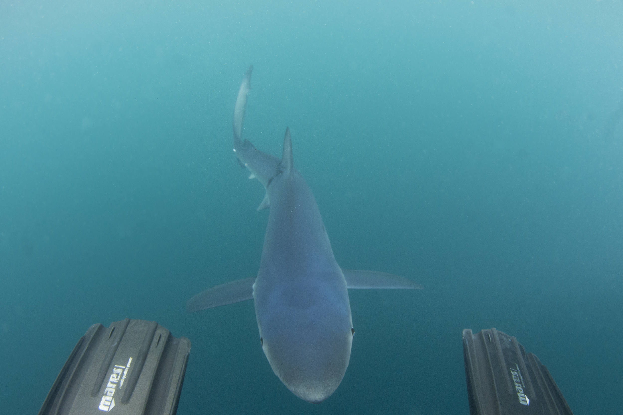 Whatcha looking for down there Mr. Shark?